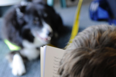This image has an empty alt attribute; its file name is readingtodogs-e1625756002880.jpg